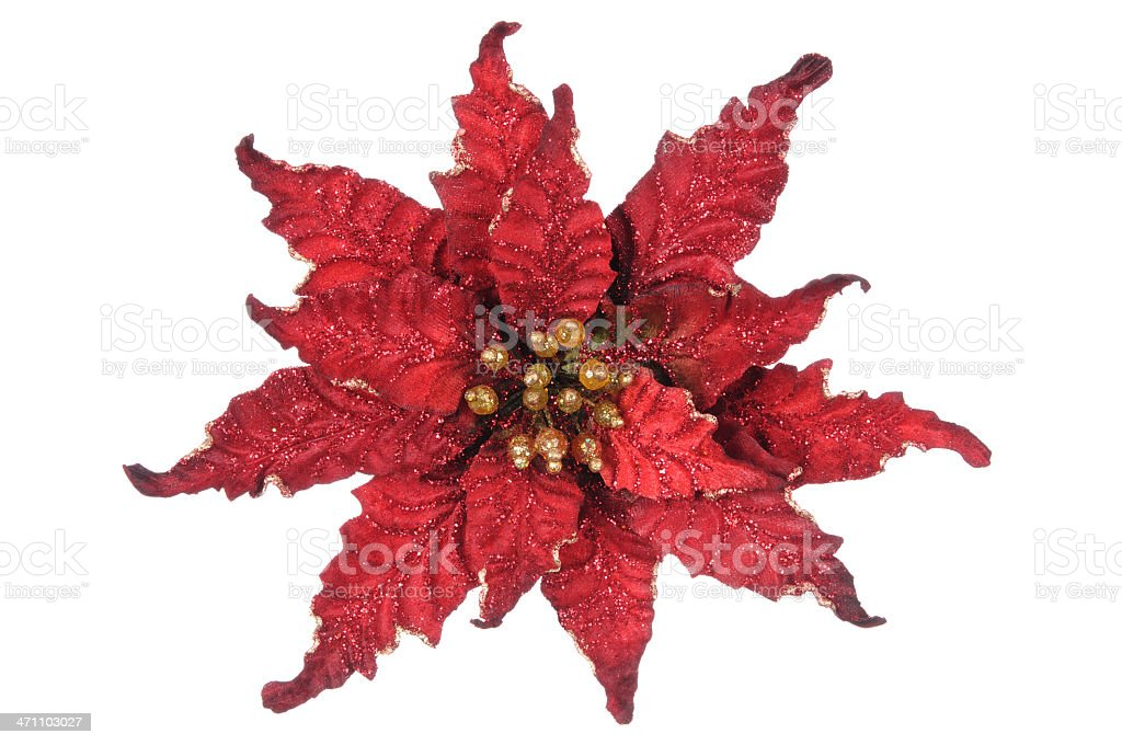 Poinsettia (XL) royalty-free stock photo