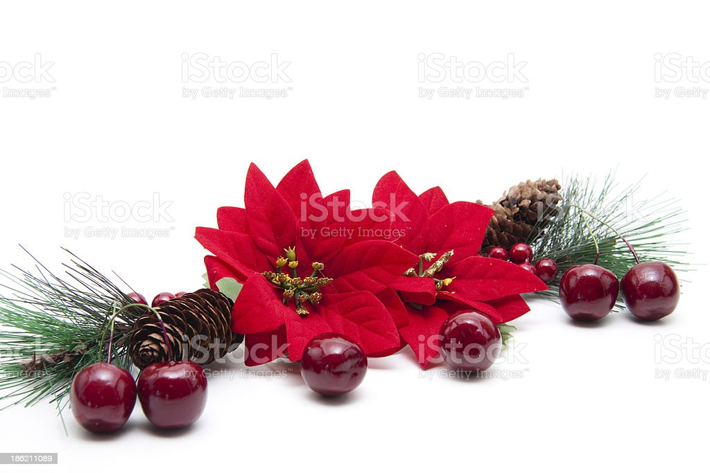 Poinsettia with cherries royalty-free stock photo