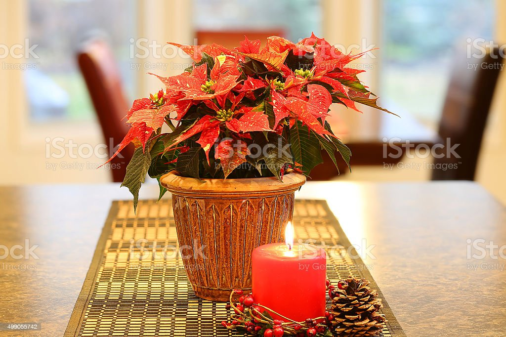 Poinsettia with red candle stock photo