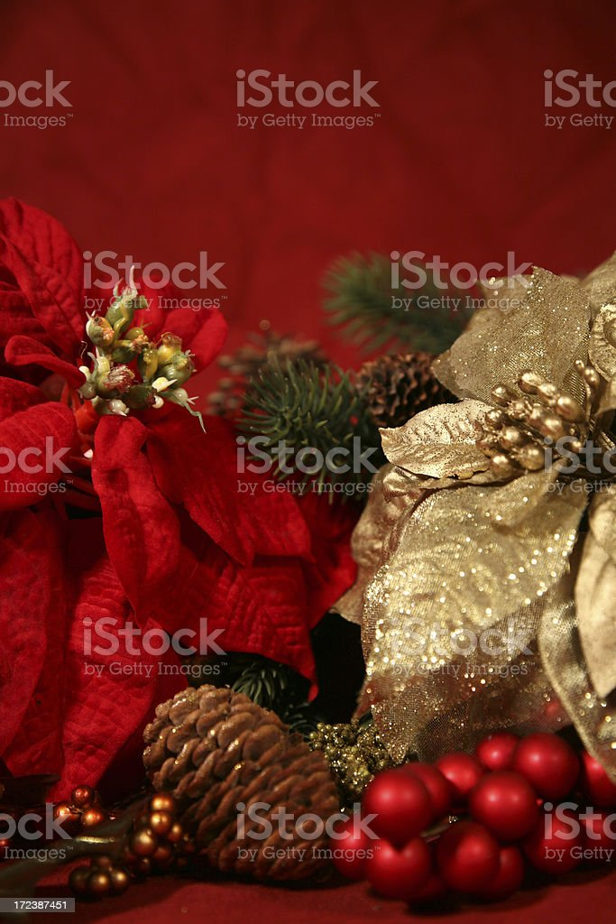 Poinsettias against Red royalty-free stock photo