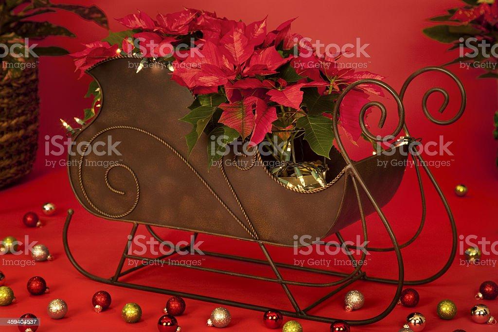 Poinsettias in a Sleigh royalty-free stock photo