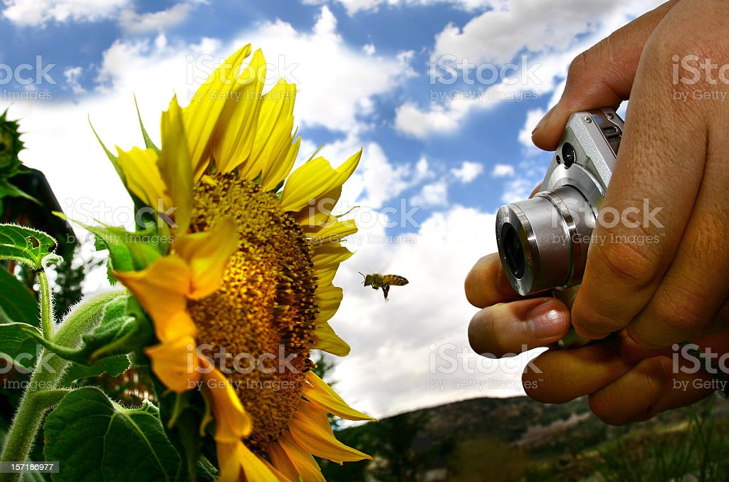 Point and Shoot royalty-free stock photo
