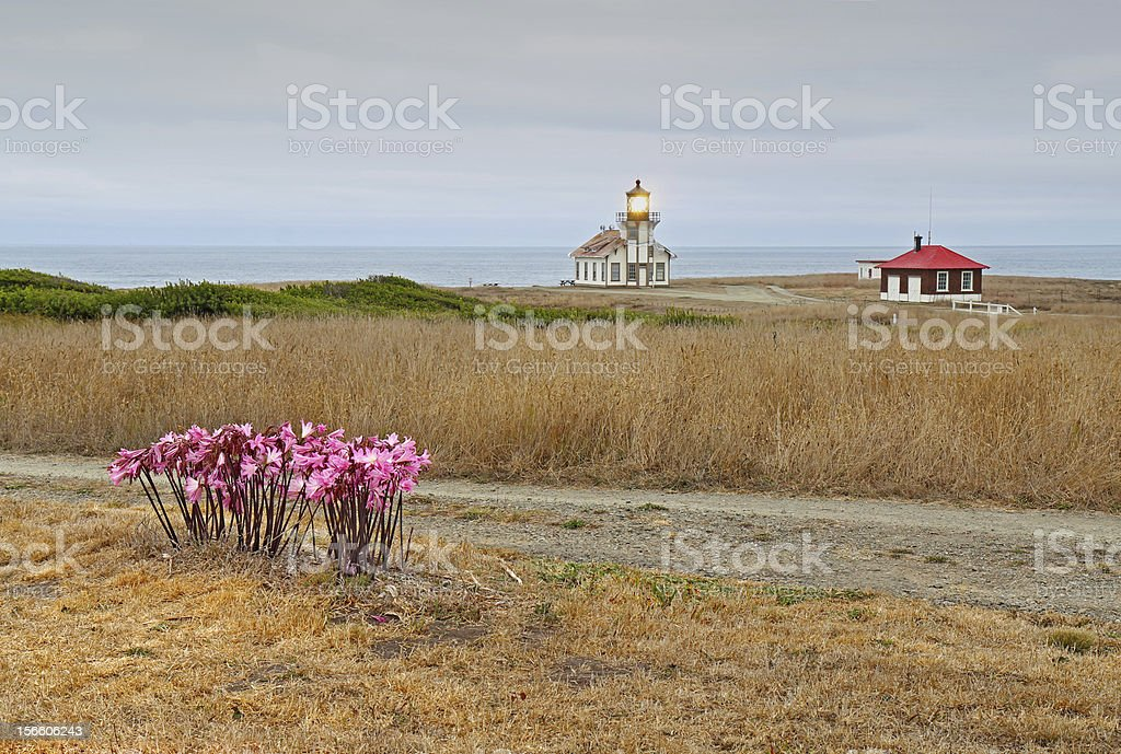 Point Cabrillo lighthouse and Amaryllis on a cloudy day royalty-free stock photo