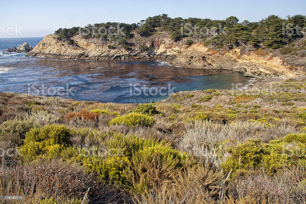 Point Lobos stock photo