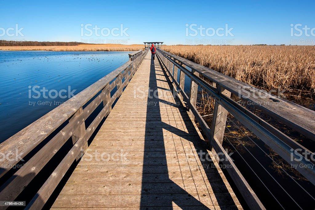 Point Pelee Marsh Boardwalk stock photo