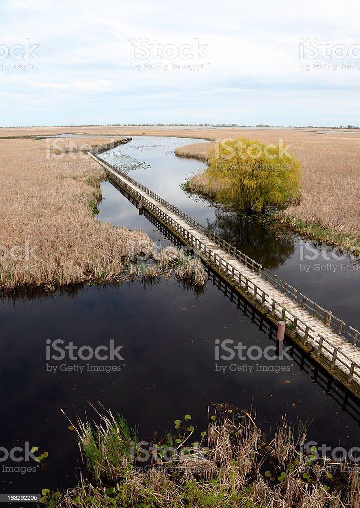 Point Pelee Marshland stock photo