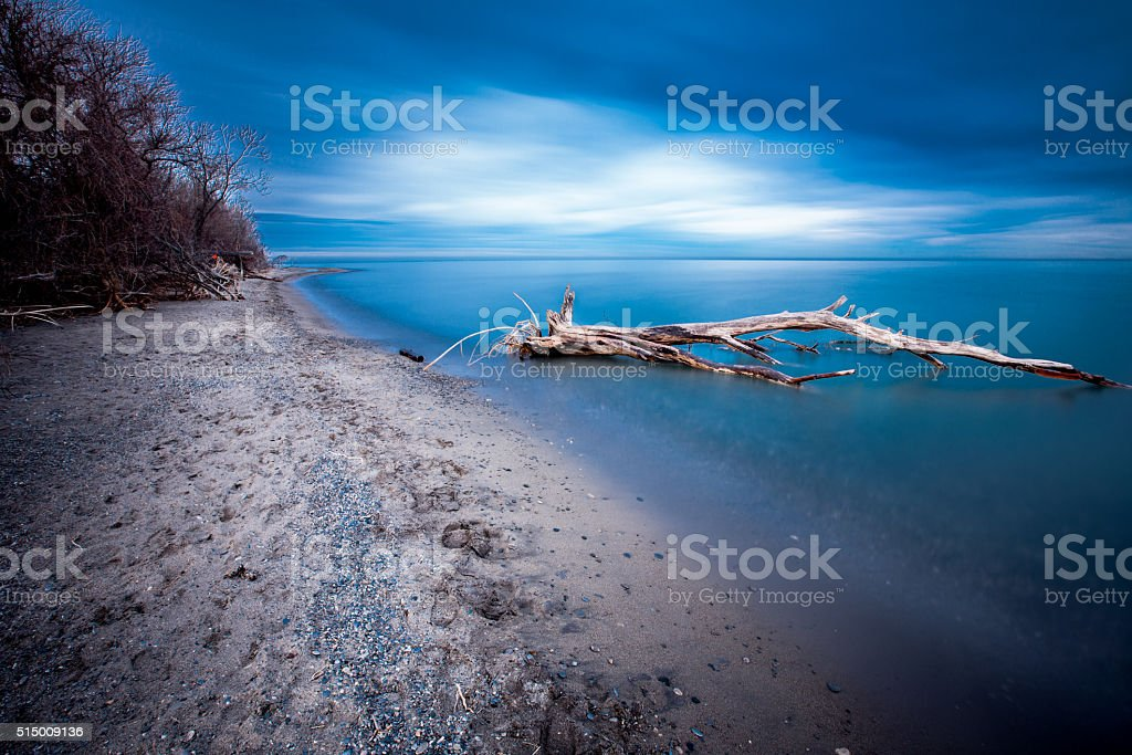 Point Pelee National Park - Dead Tree in Water stock photo