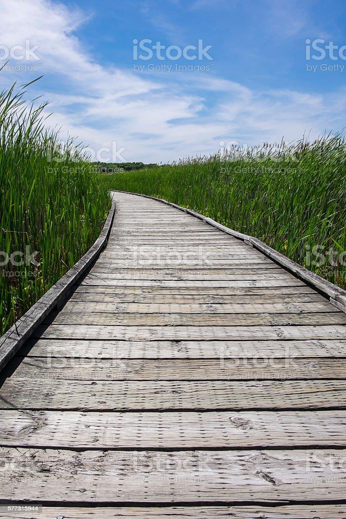 Point Pelee National Park Marsh Boardwalk in the Summer stock photo