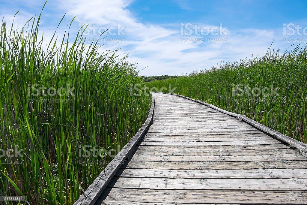 Point Pelee National Park Marsh Boardwalk stock photo