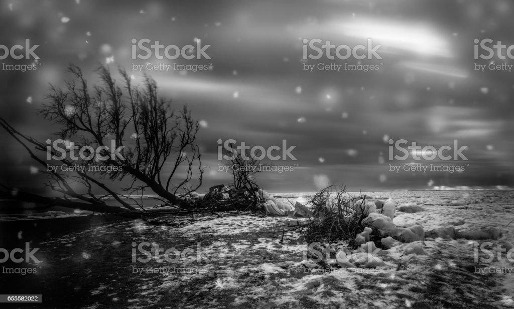 Point Pelee National Park Winter Scene stock photo