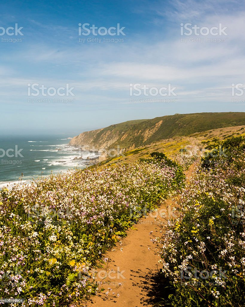 Point Reyes Trail with Spring Wildflowers, CAlifornia stock photo