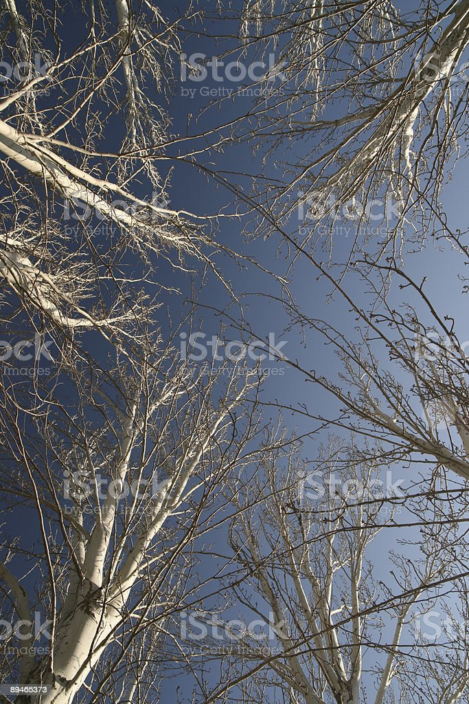 Pointing up. Apuntando alto. royalty-free stock photo