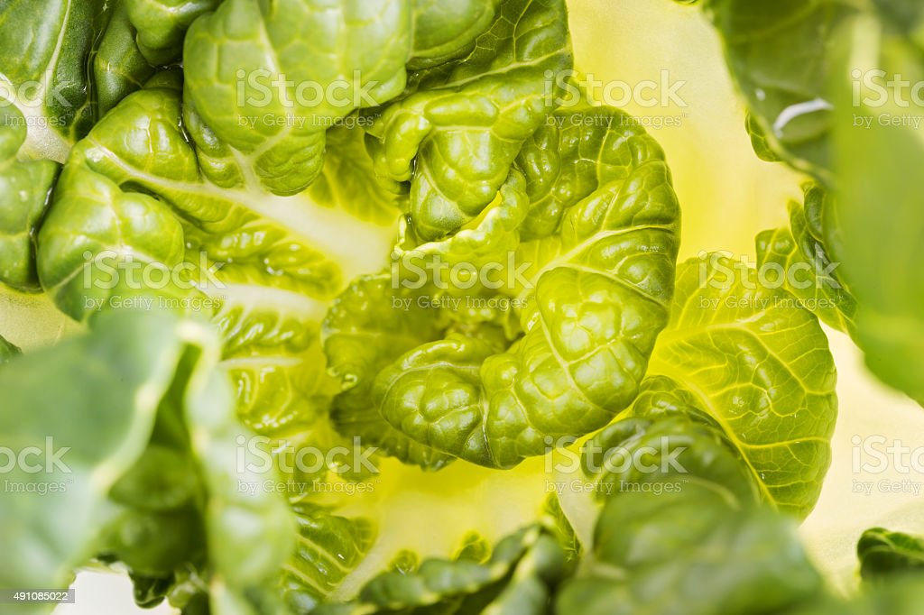 Pok Choi cabbage, top view, macro ,selective focus stock photo