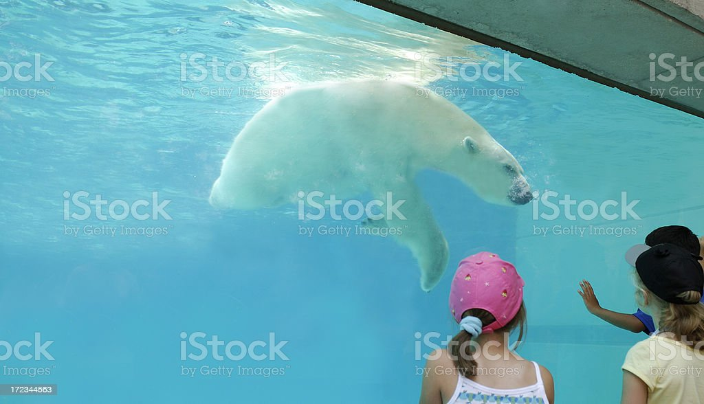 Polar bear at the zoo stock photo