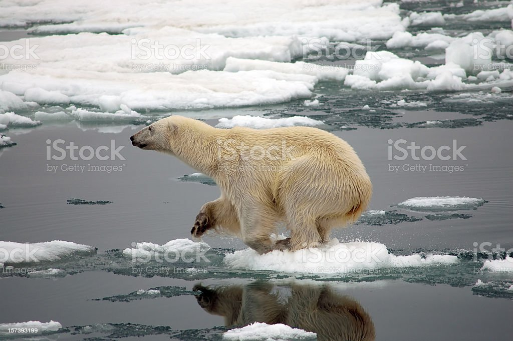 Polar bear on dire straits over small piece of ice stock photo