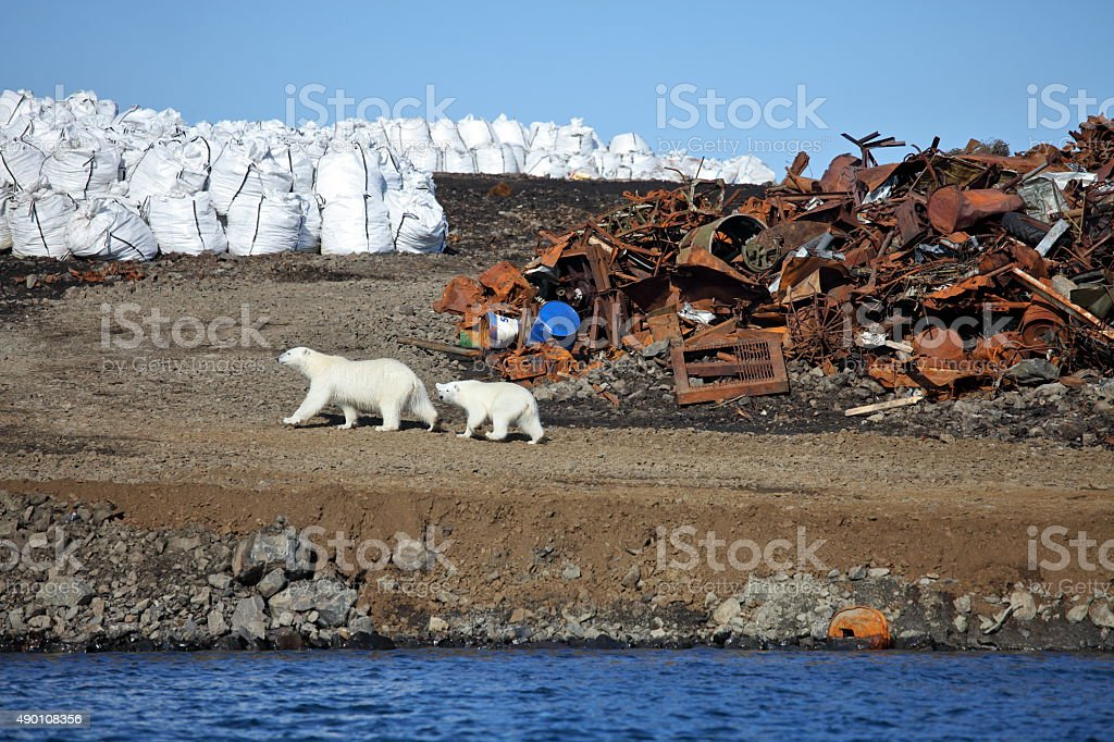 Polar bear survival in Arctic stock photo