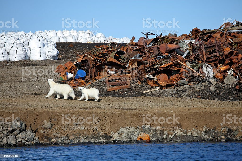 Polar bear survival in Arctic stock photo