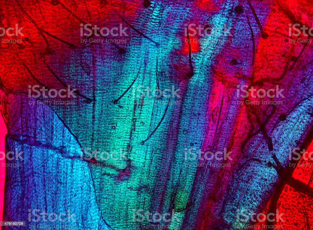 Polarizing,abstract micrograph of muscle tissue from a moth. stock photo