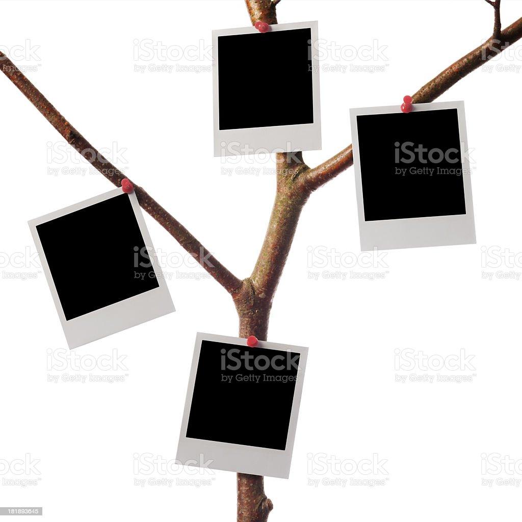 Polaroid photo tree royalty-free stock photo