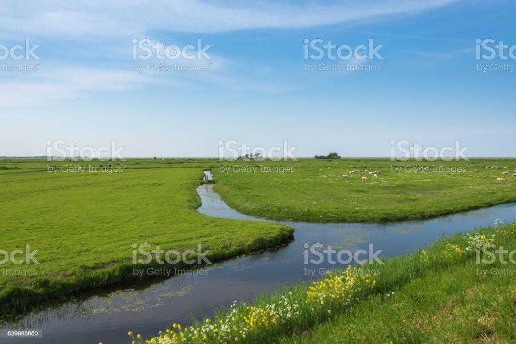 Polder scene in the Netherlands stock photo