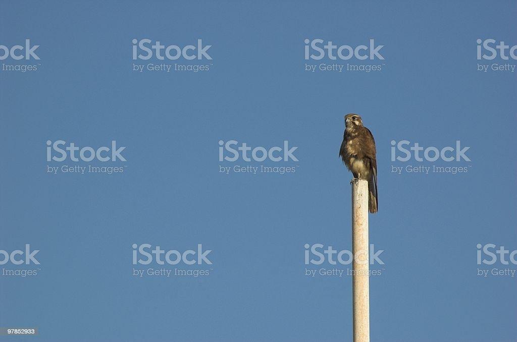 Pole sitter royalty-free stock photo