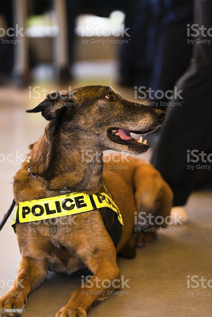 Cane poliziotto non facile la vita foto stock royalty-free