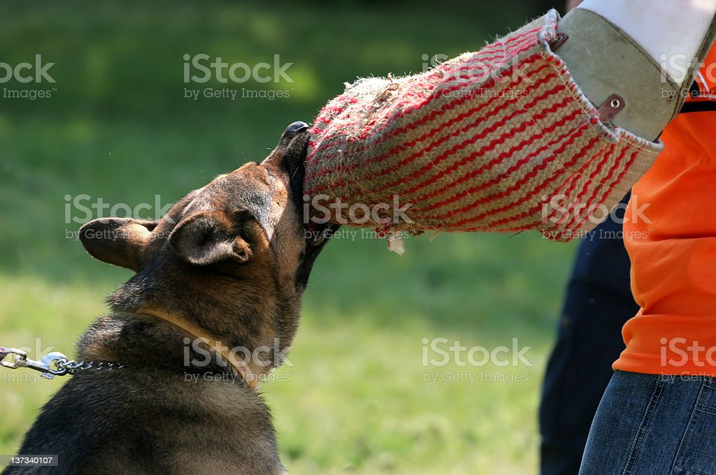 Police dog royalty-free stock photo