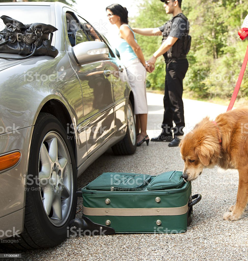 Police dog sniffing luggage as policeman handcuffs woman in background stock photo