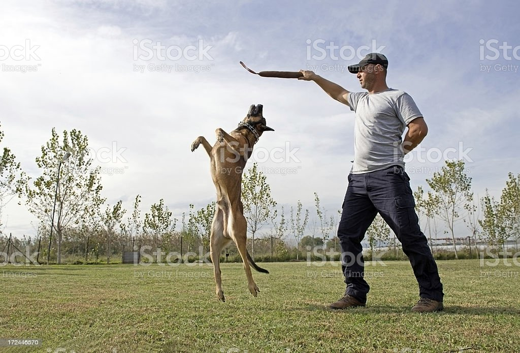 Police dog training royalty-free stock photo