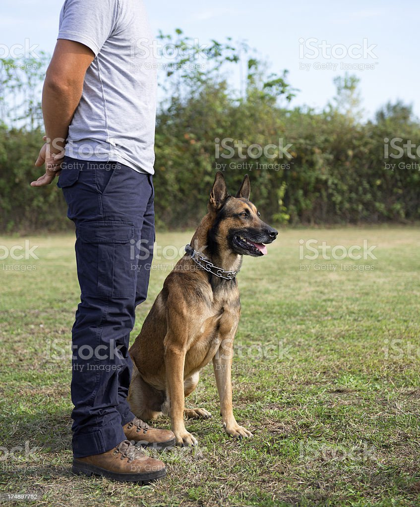 Police dog training royalty-free stock photo