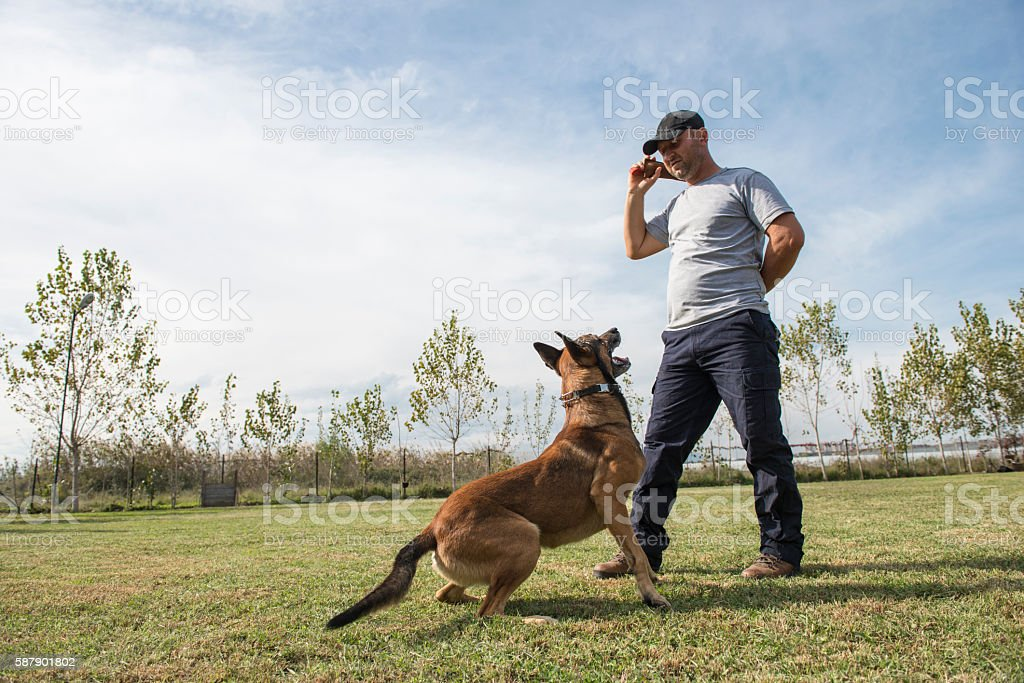 Police dog training stock photo