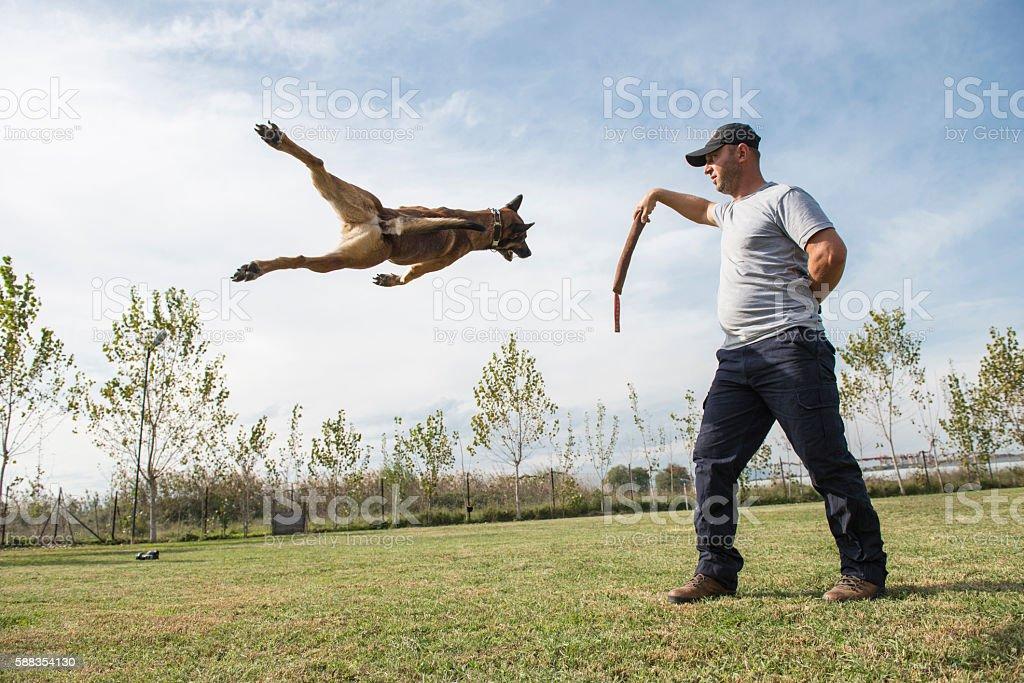Police dog training stock photo