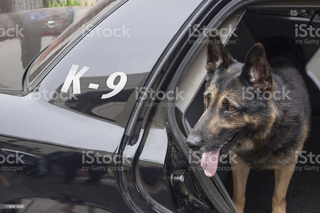 Police K-9 in Patrol Car stock photo