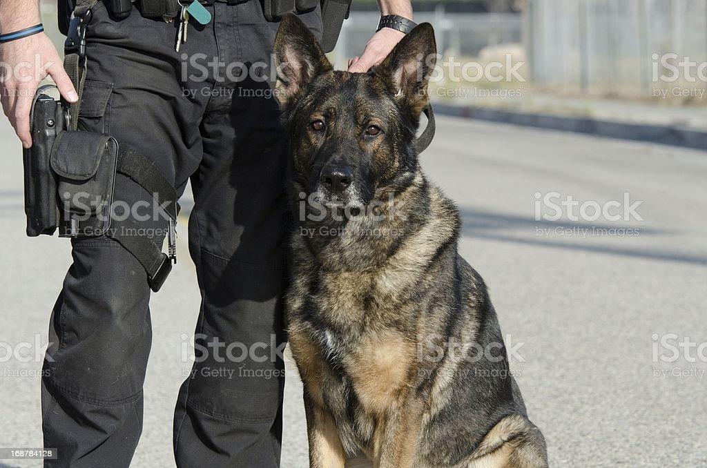 Police K9 stock photo