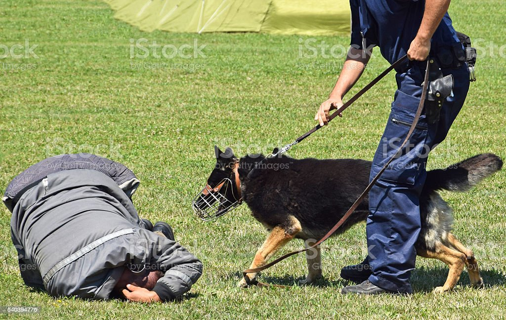 Police man and his dog stock photo