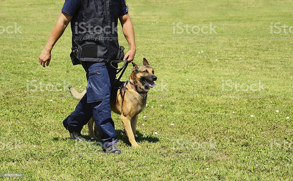 K9 police officer with his dog stock photo