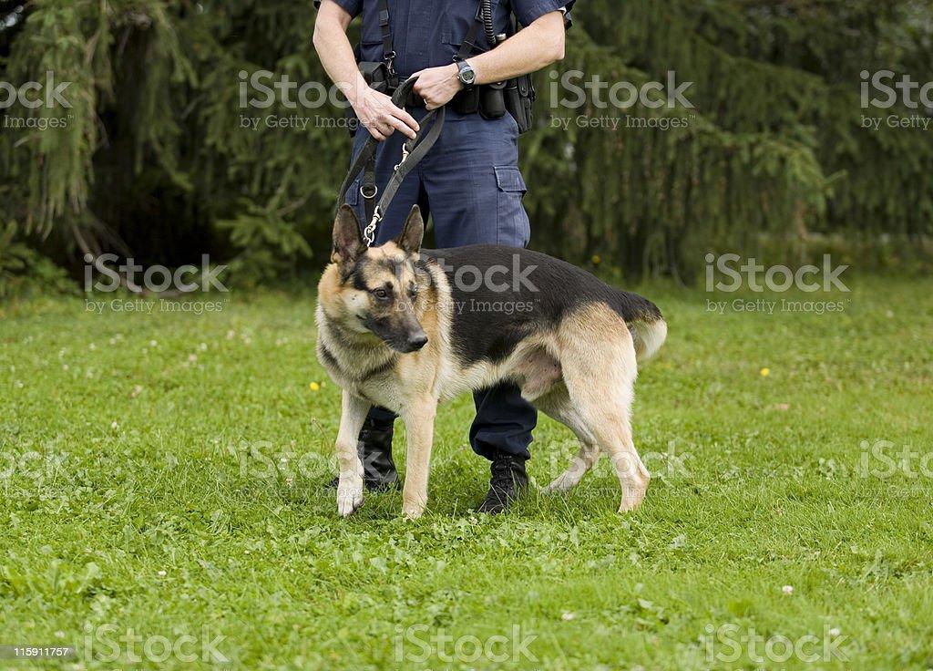 K-9 Police stock photo