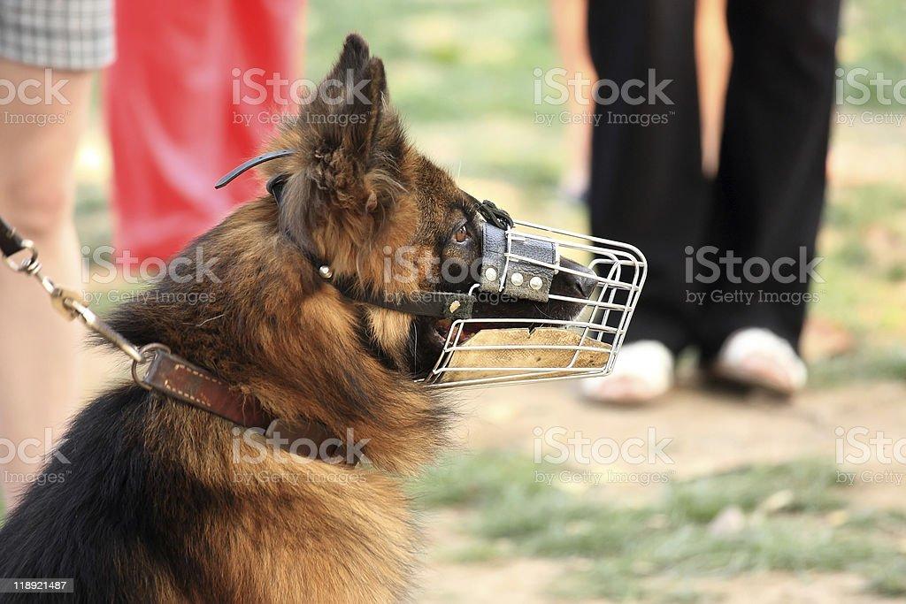 Police-dog stock photo