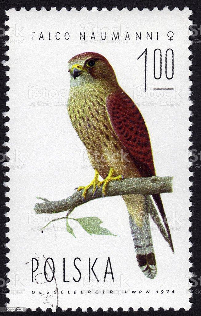 Polish stamp depicting a falco naumanni stock photo