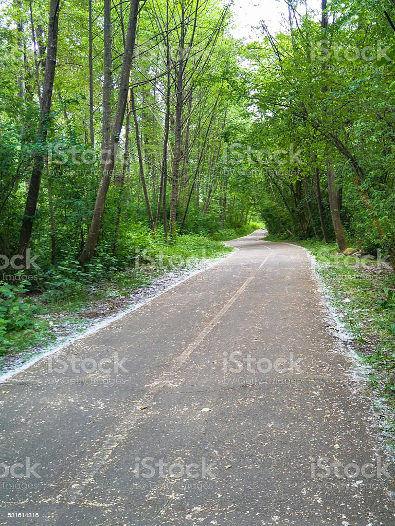 Pollen along pathway in sring. stock photo