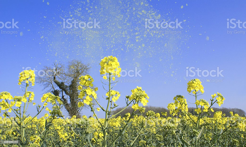 Pollen in the Air healthcare2014 stock photo