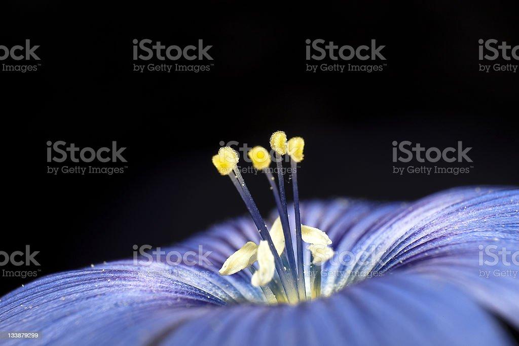 pollen of a flower stock photo