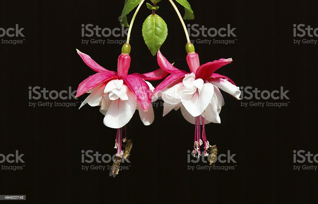 Pollination stock photo