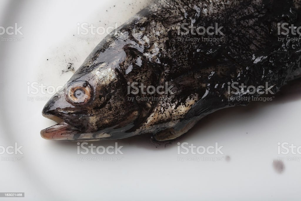 polluted contaminated fish royalty-free stock photo