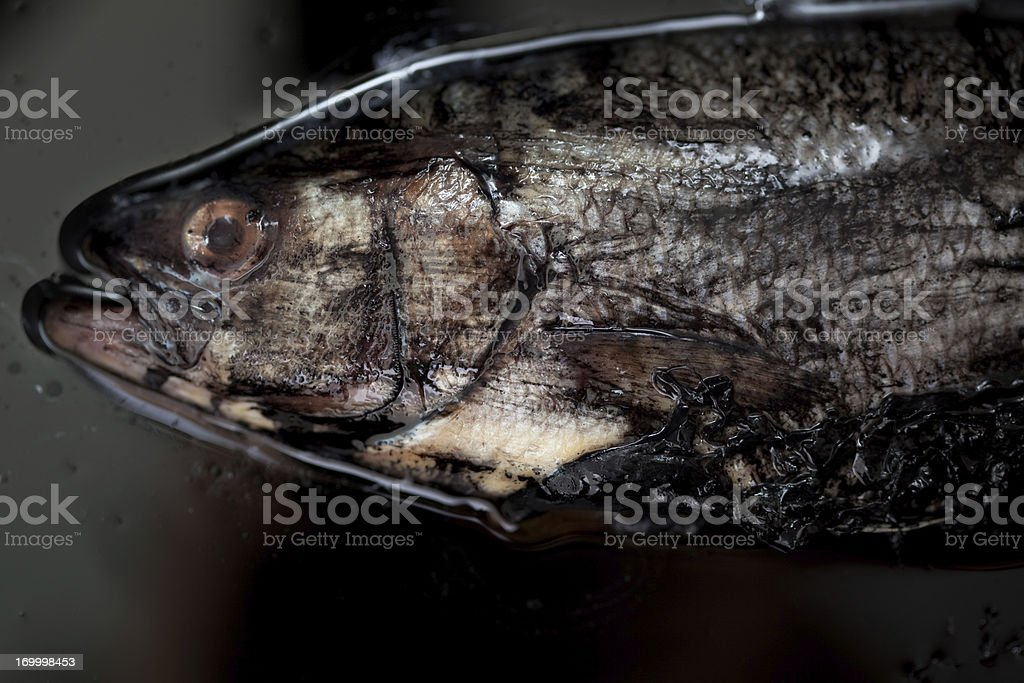Polluted Fish royalty-free stock photo