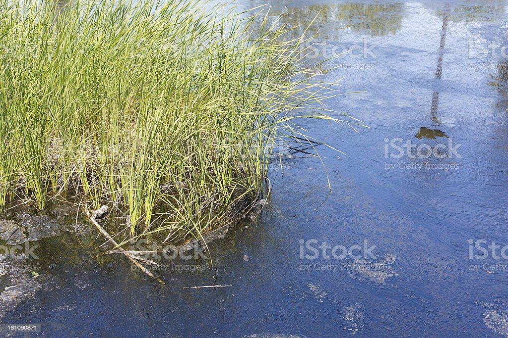Polluted Water Pond royalty-free stock photo