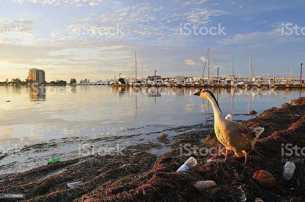 Pollution at Miami, FL stock photo