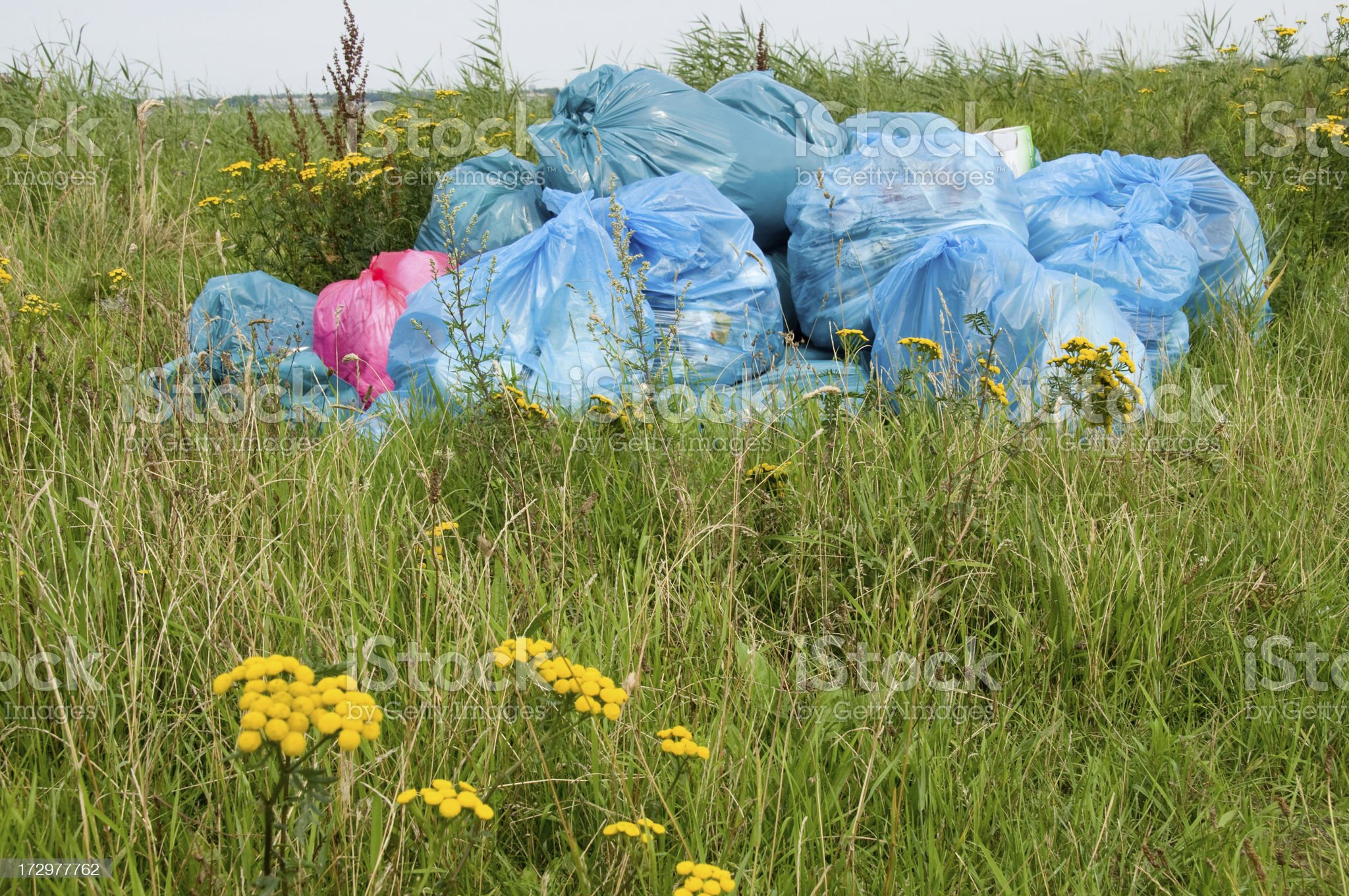 Pollution Waste,garbage bags, in field with flowers 2 royalty-free stock photo