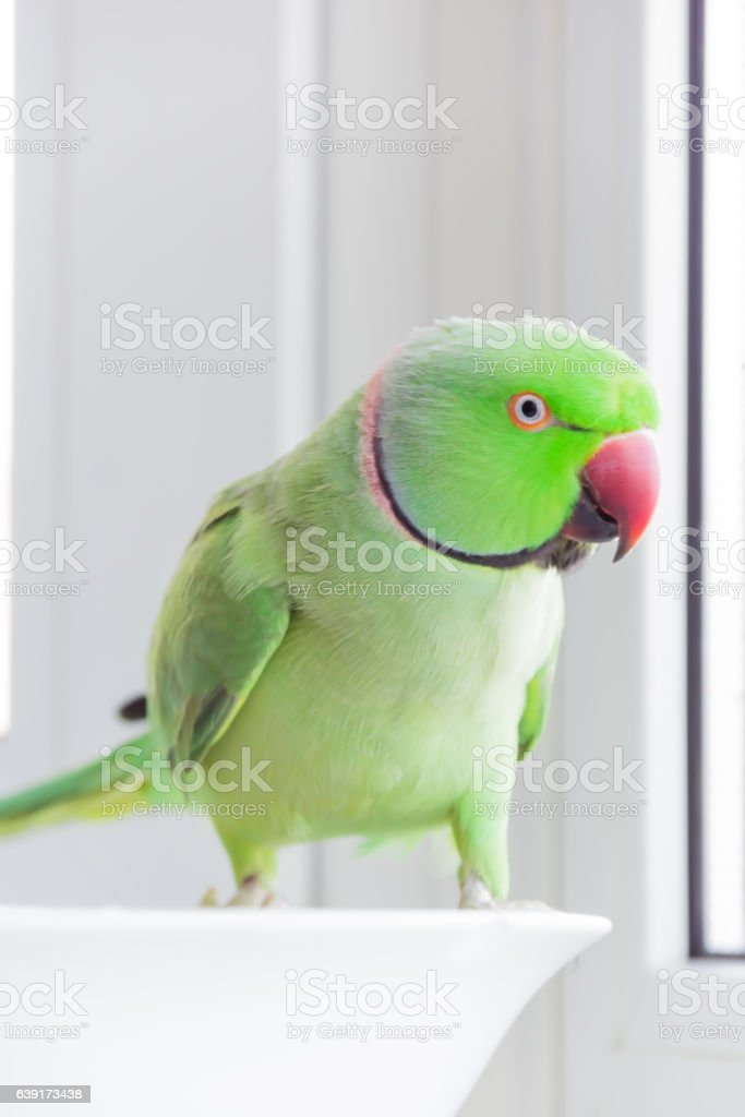 Polly stock photo