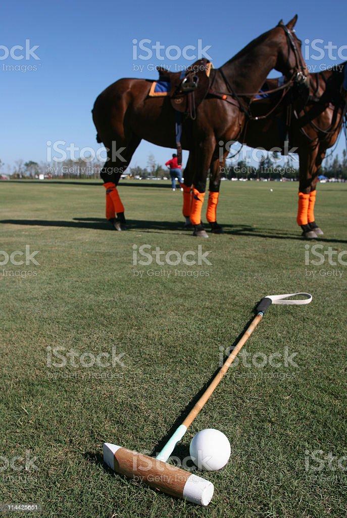 Polo Horses royalty-free stock photo